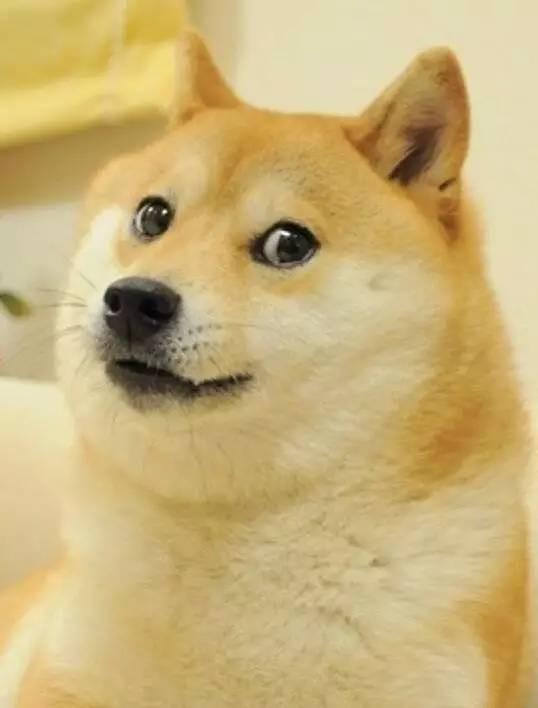 10.《黄金单身狗》/ 德蕾